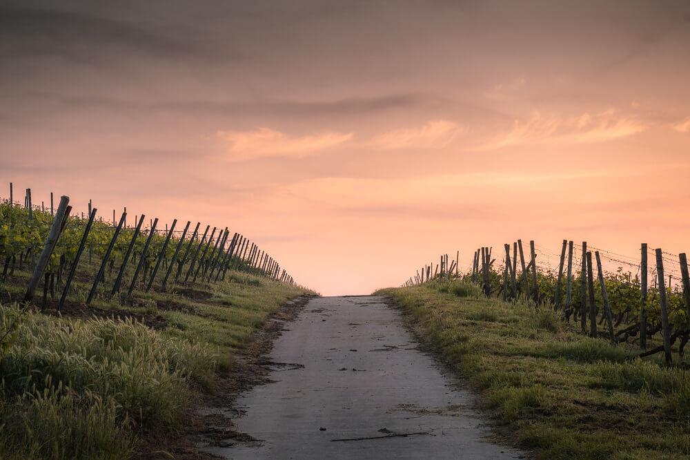 BevAlc Roundup_Oregon Set To Impose Wine Labeling Rules